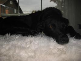 Mila sucht ein Zuhause