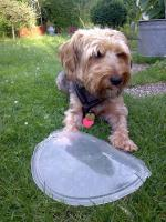 Mischlings-Hund: Jeany sucht wegen Todesfall dringend wirklich guten Platz