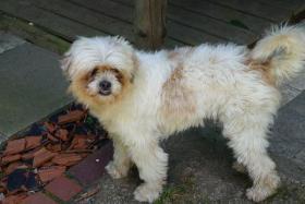 Foto 4 Mischlingshund