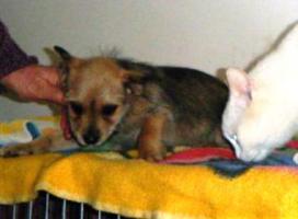 Mischlingshund BARBI