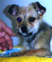 Foto 3 Mischlingshund BARBI