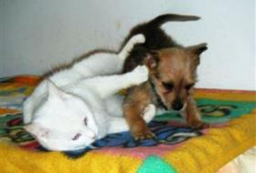Foto 4 Mischlingshund BARBI