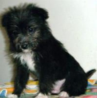 Foto 2 Mischlingshund BOSTON