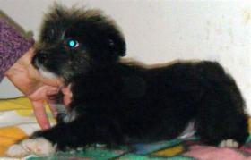 Foto 3 Mischlingshund BOSTON