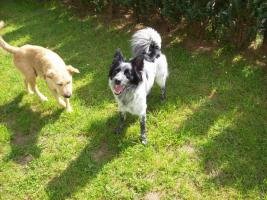 Foto 2 Mischlingshunde
