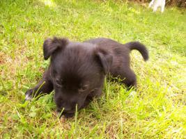 Foto 4 Mischlingshunde