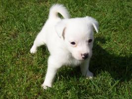 Foto 5 Mischlingshunde