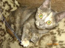Foto 2 Mischlingskatzen