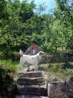 Mittelasiatischer Schäferhund wunderschöne Welpen
