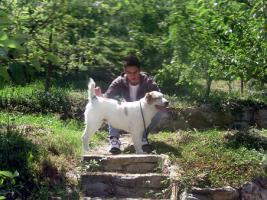 Foto 2 Mittelasiatischer Schäferhund wunderschöne Welpen