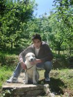 Foto 3 Mittelasiatischer Schäferhund wunderschöne Welpen