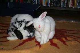 Mo und Bunny suchen ein neues Zuhause
