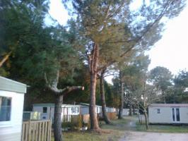 Foto 4 Mobil- Wohnhaus am Atlantik in Hourtin (Medoc)