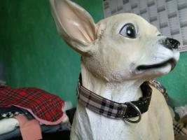 Foto 5 Modische Halsbänder für ihre Hunde