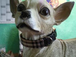 Foto 6 Modische Halsbänder für ihre Hunde
