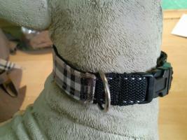 Foto 7 Modische Halsbänder für ihre Hunde