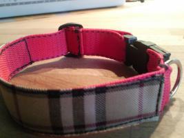 Foto 10 Modische Halsbänder für ihre Hunde