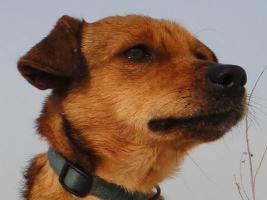 Mona-schüchternes Hundeherz sucht
