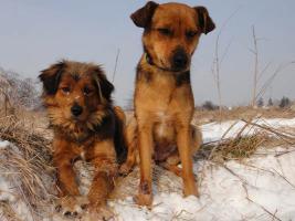 Foto 3 Mona-schüchternes Hundeherz sucht