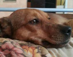 Foto 5 Mona-schüchternes Hundeherz sucht