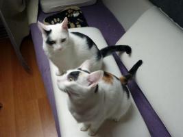 Monsta und Kr�mmel suchen ein neues Heim