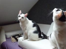Foto 3 Monsta und Kr�mmel suchen ein neues Heim