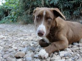 Foto 6 Monty - klein lieb vespielt