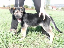 Mosi- zuckersüßes Hundemädchen sucht ein Zuhause fürs Leben!