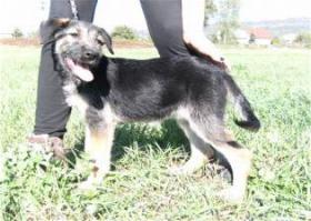 Foto 3 Mosi- zuckersüßes Hundemädchen sucht ein Zuhause fürs Leben!