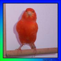 Foto 2 Muntere Singvögel suchen ein neues zu Hause!