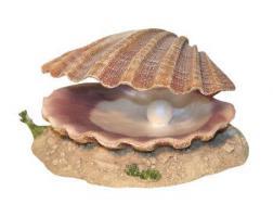 Muschel mit Luftanschluss www.Tiershop4000.de
