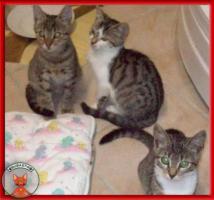 NOTFALL: 8 Katzenkinder brauchen dringend Fix- oder Pflegeplätze