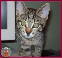 Foto 4 NOTFALL: 8 Katzenkinder brauchen dringend Fix- oder Pflegeplätze