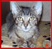 Foto 6 NOTFALL: 8 Katzenkinder brauchen dringend Fix- oder Pflegeplätze