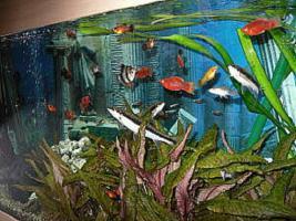 NOTFALL: Aquarium 200L komplett mit Besatz und Zubehör