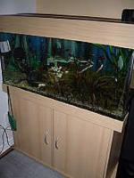 Foto 3 NOTFALL: Aquarium 200L komplett mit Besatz und Zubehör