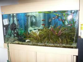 NOTFALL: Aquarium 200l komplett mit Zubehör