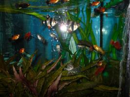 Foto 2 NOTFALL: Aquarium 200l komplett mit Zubehör