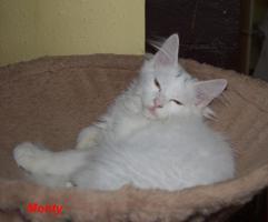 Foto 2 Nachwuchs bei den Warsteiner Beauty Cats