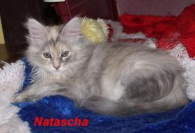 Foto 4 Nachwuchs bei den Warsteiner Beauty Cats