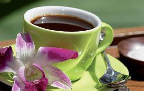 Natures Immune Gr�ner Kaffee m. Garcinia!!!