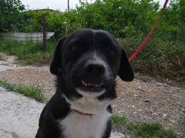 Negrito, ein Sonnenscheinhund wartet seid über 2 Jahren im Heim