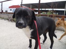 Foto 2 Negrito, ein Sonnenscheinhund wartet seid über 2 Jahren im Heim