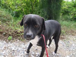 Foto 3 Negrito, ein Sonnenscheinhund wartet seid über 2 Jahren im Heim
