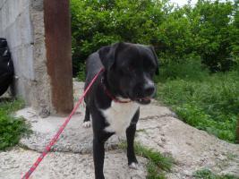 Foto 5 Negrito, ein Sonnenscheinhund wartet seid über 2 Jahren im Heim