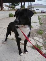 Foto 6 Negrito, ein Sonnenscheinhund wartet seid über 2 Jahren im Heim