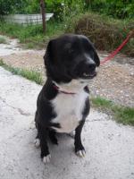 Foto 7 Negrito, ein Sonnenscheinhund wartet seid über 2 Jahren im Heim
