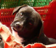 Foto 8 Negrito, ein Sonnenscheinhund wartet seid über 2 Jahren im Heim