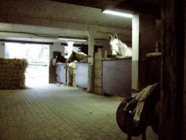 Foto 5 Nette, kleine Stallgemeinschaft hat wieder Boxen frei