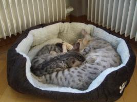 Foto 2 Neu: Kuschelweiches Katzenbett / Schlafplatz